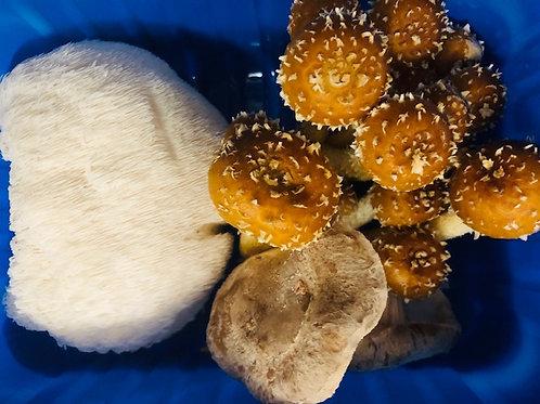 BULK Mushrooms