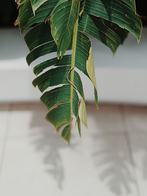 Canva - Tropical indoor plant with large