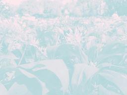 garlic_edited_edited.jpg