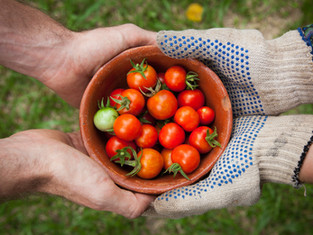 Tomatoes from your garden
