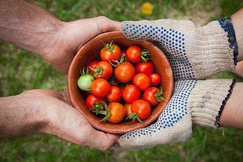 Tomato - Red Cherry