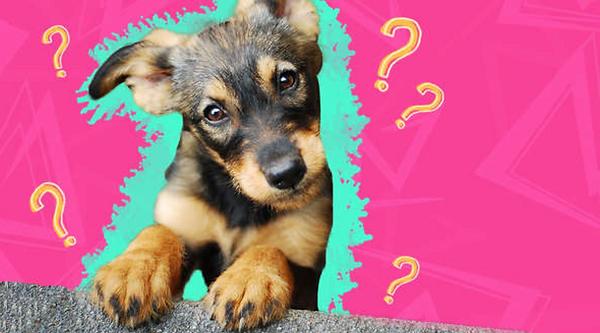Rescue dog myths.png