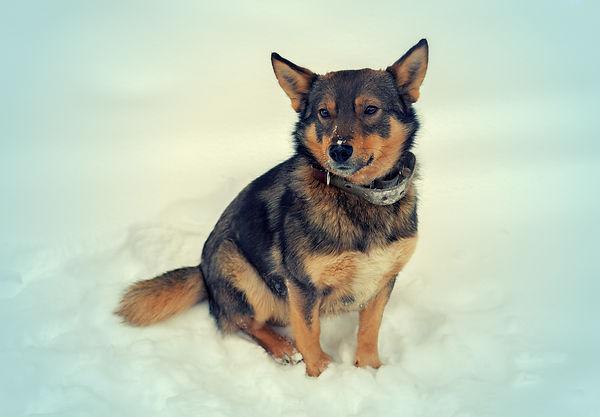 Winter dog.jpg