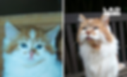 World's oldest cat.png