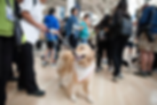 Pearson therapy dogs.PNG