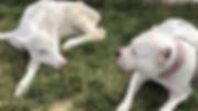 Calf and dog.png