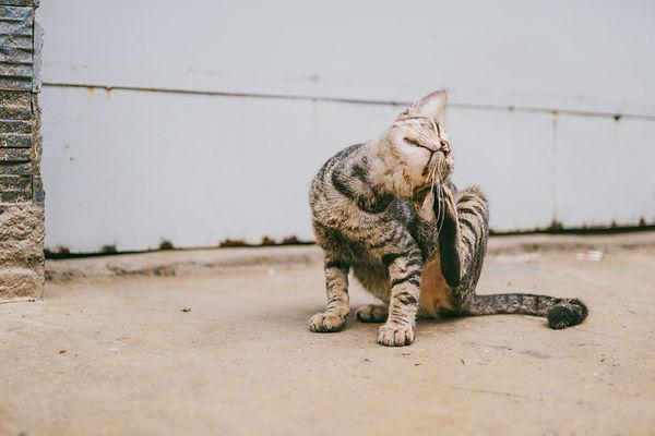 adorable-animal-cat-1265613.jpg
