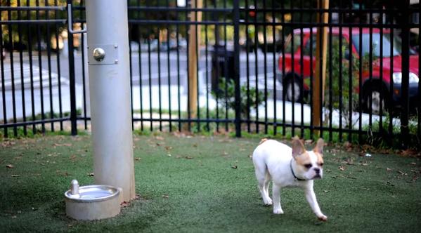 Toronto dog parks.png