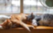 brown-and-white-tabby-kitten-1787414.jpg