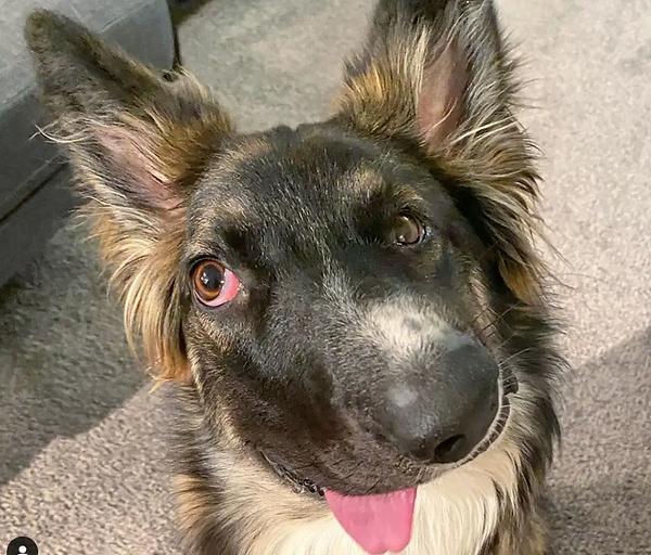Dog Alberta.png