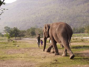 un mahout, un enfant et un éléphant / a mahout, a young kid and an elephant