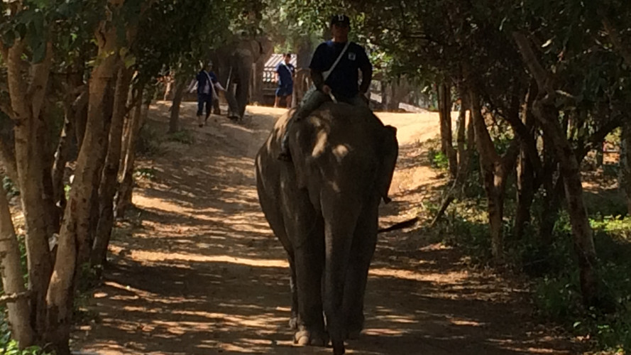 a mahout rides his elephant