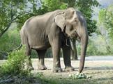 "Sao Noi ""mon"" éléphant 2018 / Sao Noi ""my"" 2018 elephant"
