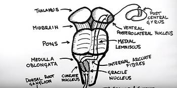 colonne dorsale 6.png