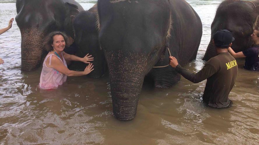 Grooming social humain-éléphants