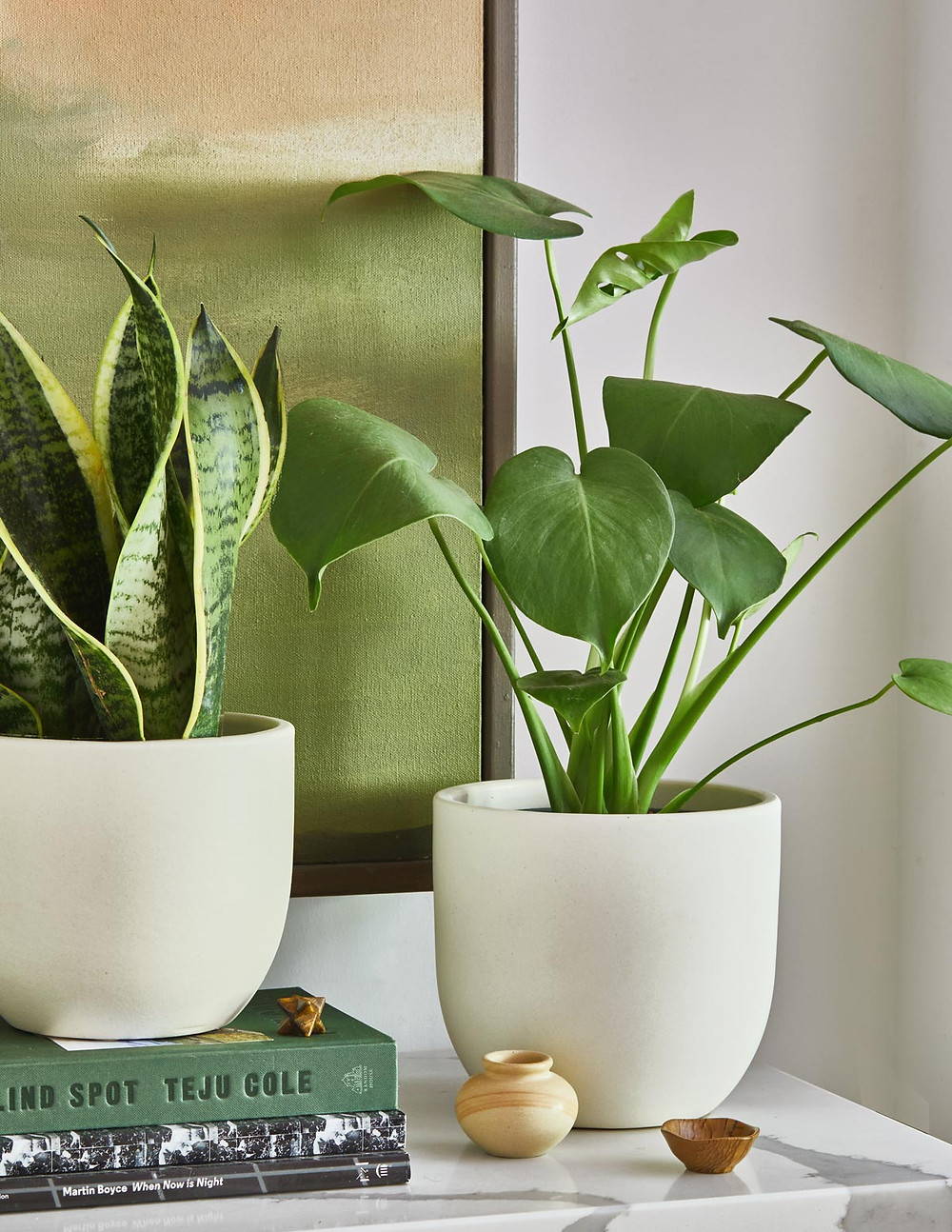 Two green plants in white planters