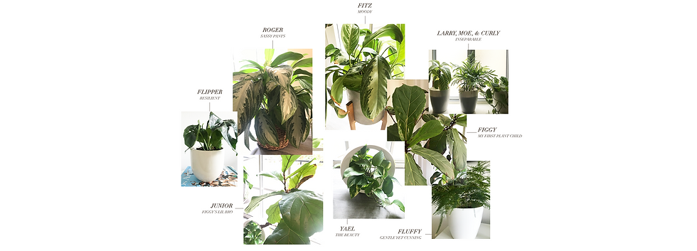 about_plantfam.png