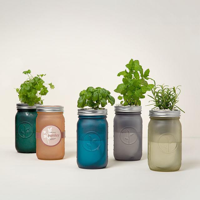 multi colored mason jars with herbs growing out of them housewarming gift