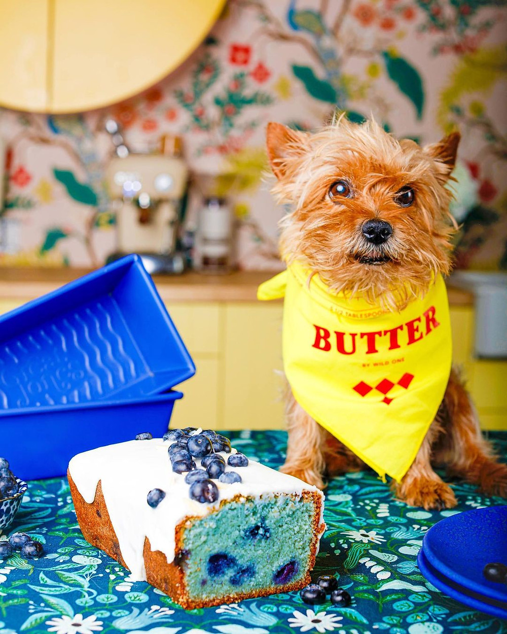 great jones blueberry bakeware on table with a dog wearing a yellow bandana
