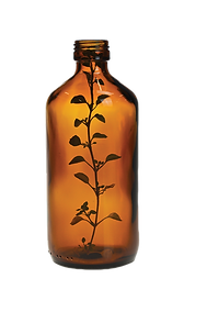 bottle with herb