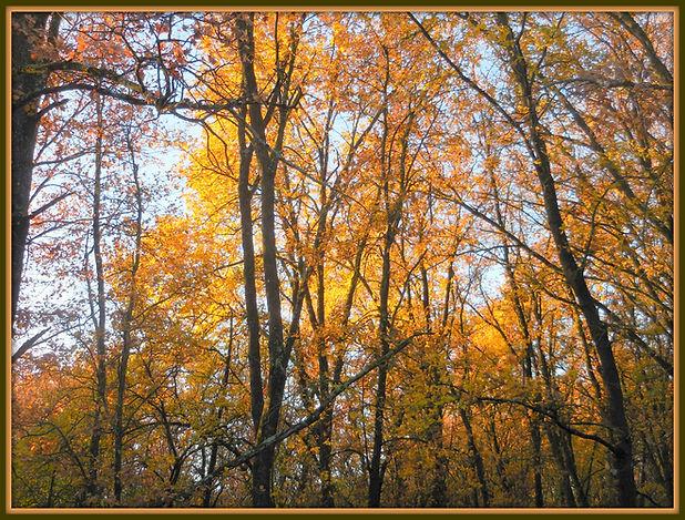 autunno festa dell'albero.jpg