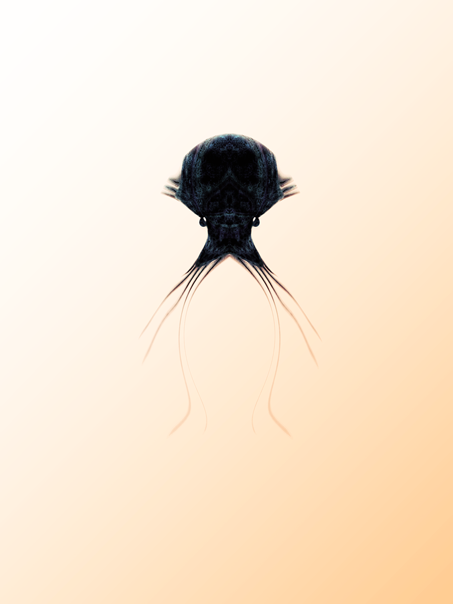 Crini-species-unspecified-Hastings.png