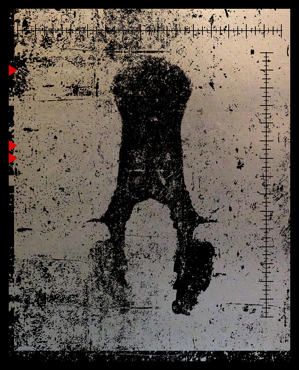 SALACIA-silhouette-3.png