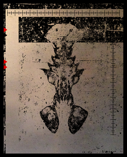 SALACIA-silhouette-6b.png