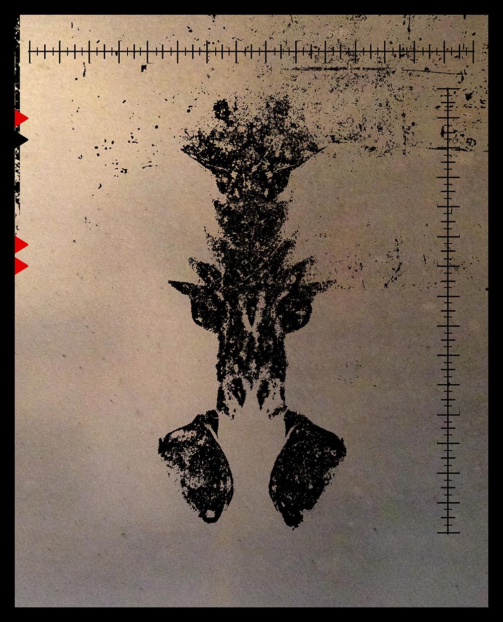 SALACIA-silhouette-5.png