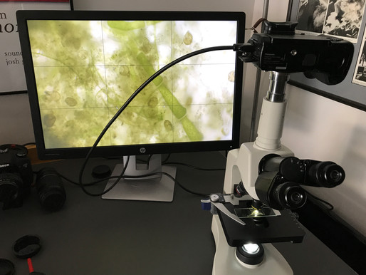 Early tests with microscope and 4K video