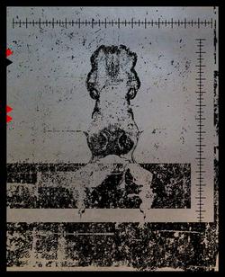 SALACIA-silhouette-4.png