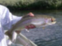 San Juan River Fly Fishing