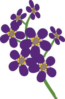 Purple Flawers Flowers