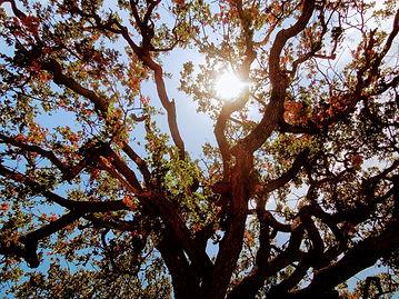 sun through a tree
