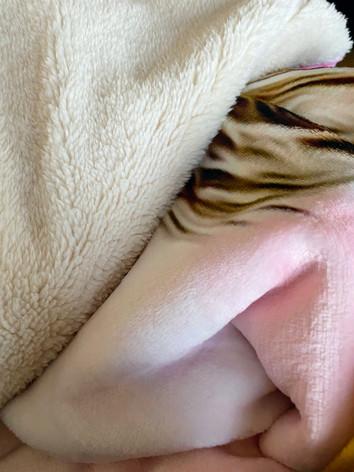 Double Down Blankets Sherpa