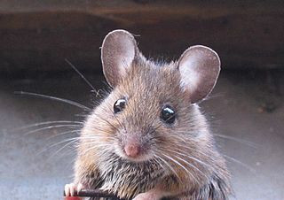 Lab Mouse Charged For Alleged Unethical Behavior*