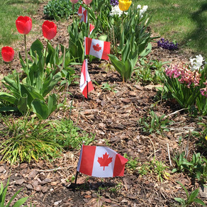 Fewer Canadian Flags Will Be Harvested This Year