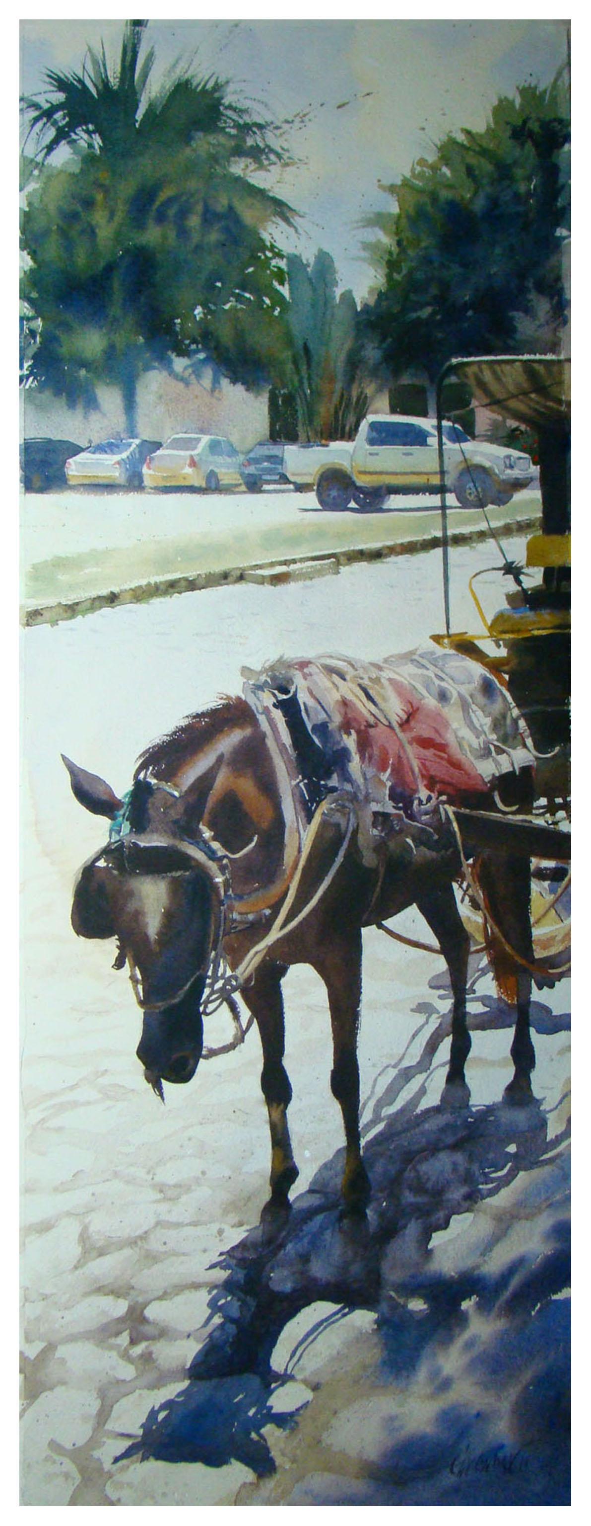 Cavalo na praça / Paraty
