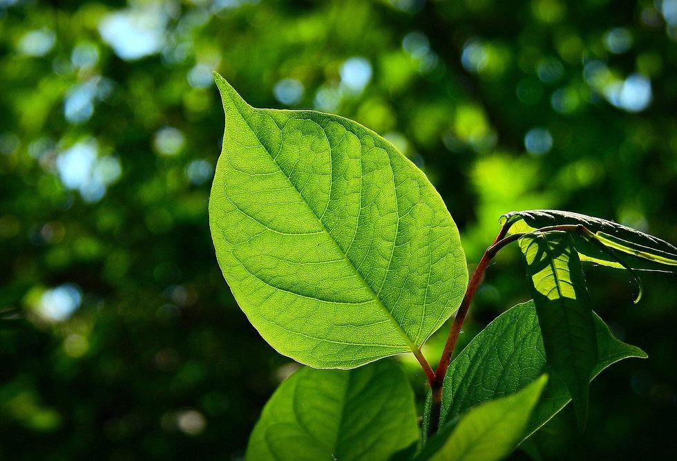 leaf-5135083_1920.jpg