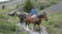 caballo-trabajando.jpg