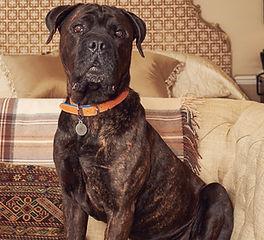 Marvin Dog.jpg