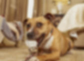 Fancy Trixie 2.jpg