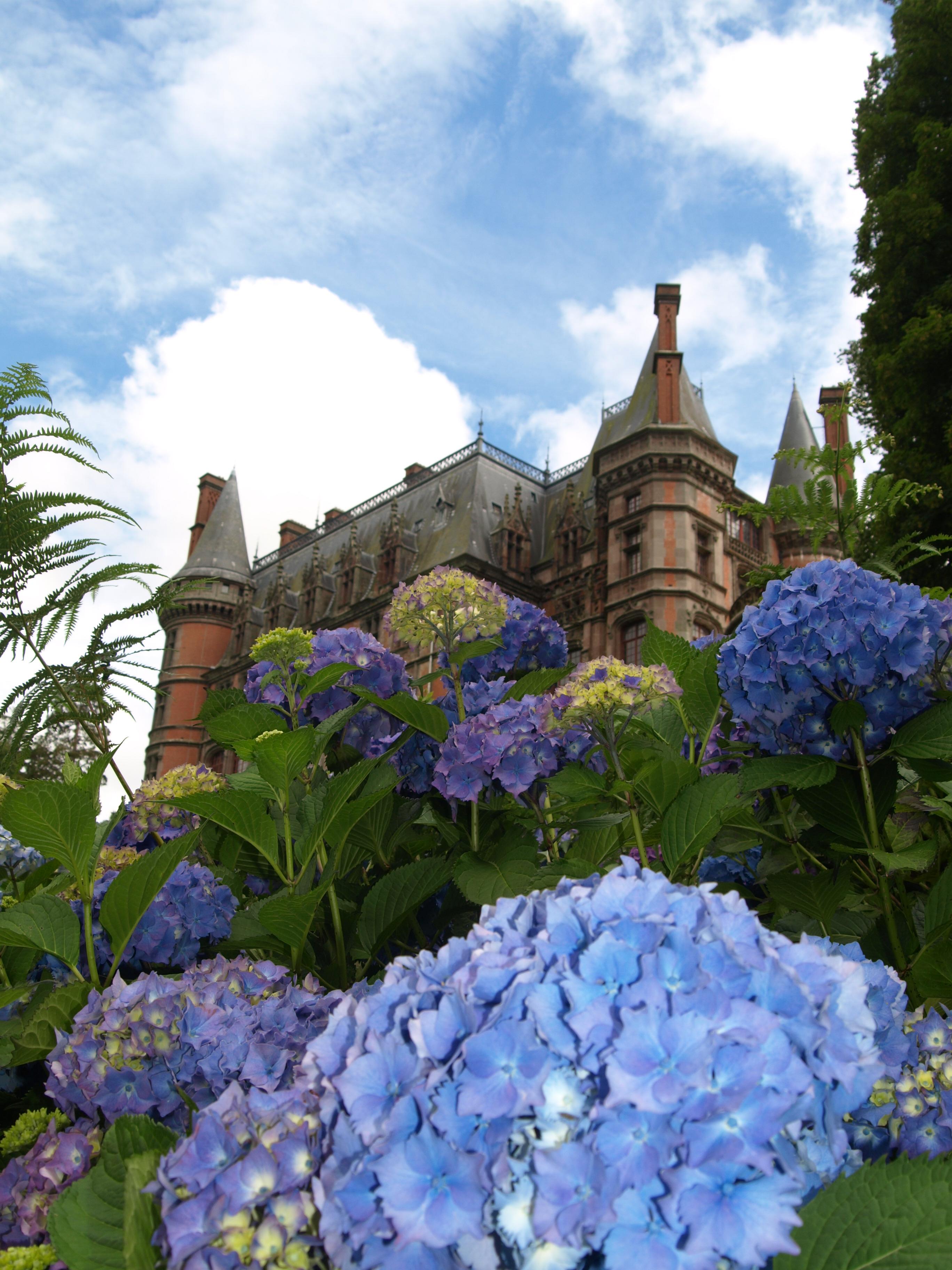 Hortensienschloss