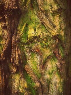 Herz des Baums
