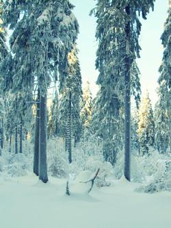 Versinkendes Reh im verschneiten Sauerland