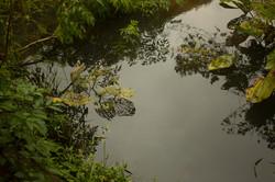 Nosso lago