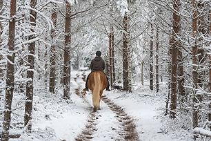 Winter Rides.jpg