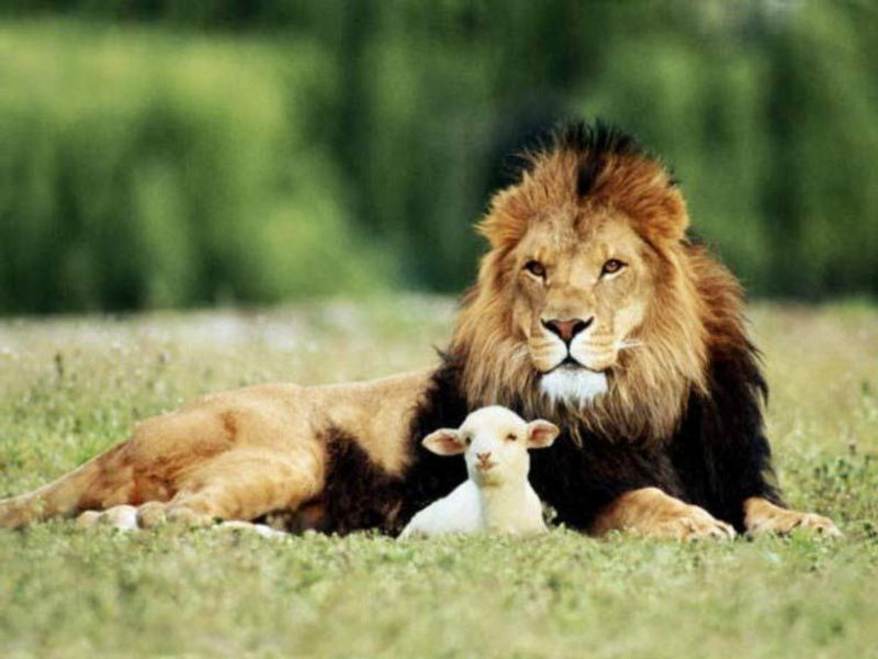 lion-and-lamb