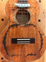 Tenor ukulele Chladni pattern, monopole at 318 Hz
