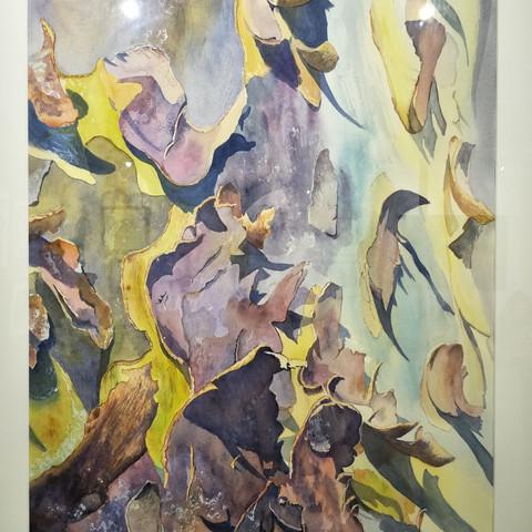 Glynis Brown  Summer Colours - Eucalypt Bark 100x80cm Watercolour  $795